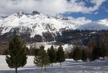 Schneebedeckte Berge mit Wald im Vordergrund