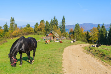 Black horse grazing on green field in Pieniny Mountains, Poland