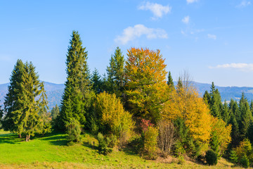 Autumn color leaves on trees in Pieniny Mountains, Poland