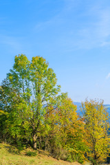 Trees on green field in Pieniny Mountains in autumn, Poland
