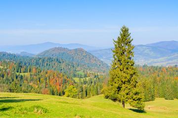 Tree on green meadow in Pieniny Mountains in autumn, Poland