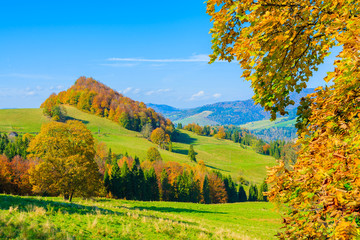 Autumn color leaves and green hills in Pieniny Mountain, Poland