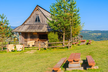 Bench on green meadow and hut in Pieniny Mountains, Poland