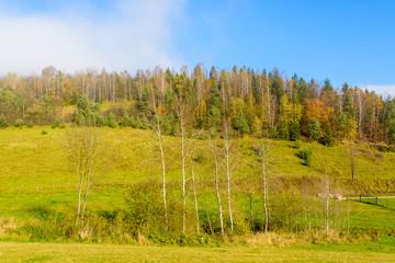 Colorful autumn trees on sunny day, Beskid Niski Mountains