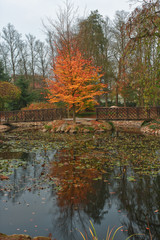 Autumn park in city with reflection