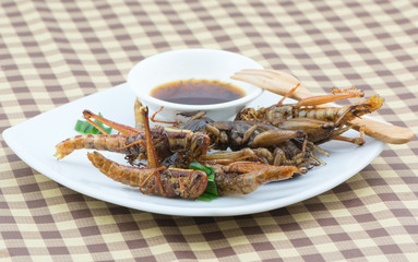 Fried grasshopper on white dish