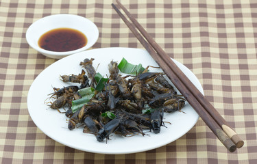 fried cricket on white dish