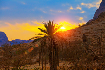 Palm against mountains at sunset, Israel