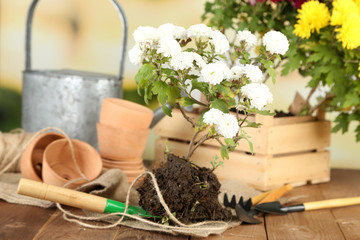 Rustic table with flowers, pots, potting soil, watering can and