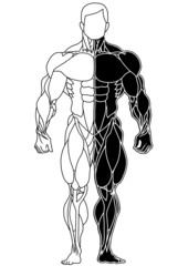 muscle skeleton bodybuilder front view