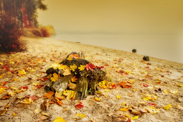 stump with autumn leaves