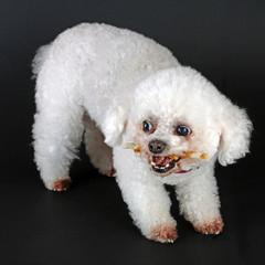 Hund mit Kauknochen