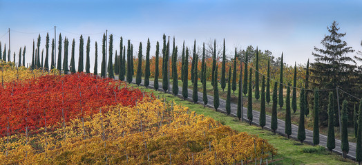 Colored road of cypresses