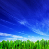 Fototapety High resolution image of fresh green grass and blue sky
