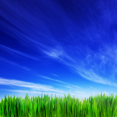 High resolution image of fresh green grass and blue sky
