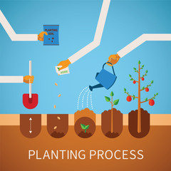 Vector timeline infographic concept of planting process
