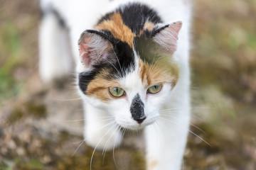 Closeup on cat walking slowly