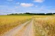 Wald, Weinberge und Felder