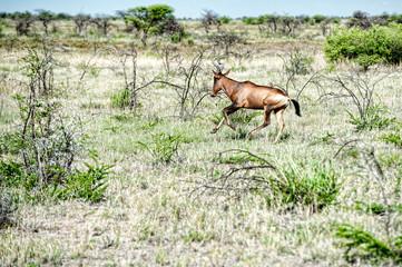 Cudu, Namibia, Africa