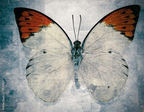 butterfly - 73878358