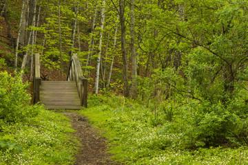 Spring Trail Bridge