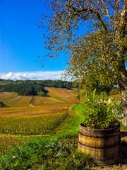 Belle Bourgogne