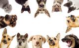 set pets - 73885369