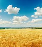 field with golden harvest under cloudy sky