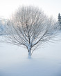 Abstract closeup of a tree in winter - 73893310