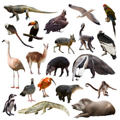 Set of animals of South America over white background