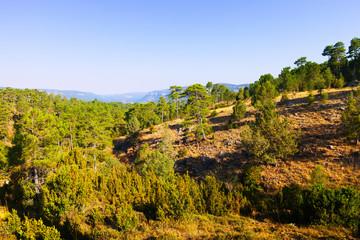 forest mountains  at Serrania de Cuenca