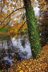 Efeu und Laub im Herbst am Teich