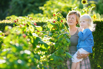 Grandmother and her baby girl picking raspberries