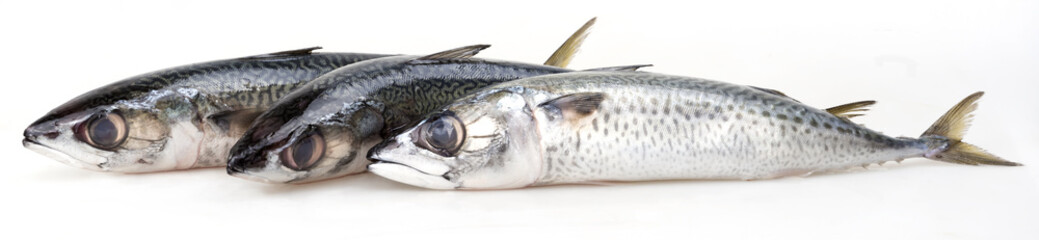 mackerel isolated