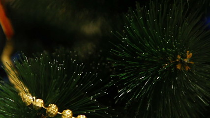 Camera moves between Christmas tree branches