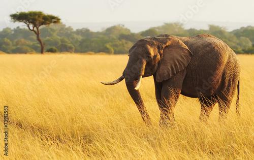 Staande foto Afrika Elephant on the Masai Mara in Africa