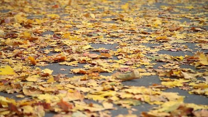 Orange autumn leaves on the pavement