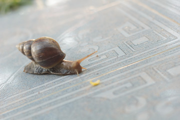 Snail on the tiles