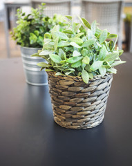 Plant on wooden table  Home interior decoration