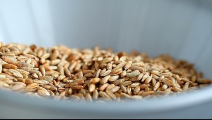hand-mill grinds the grain of wheat in wholegrain flour