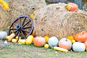 Cart wheel, pumpkins and vegetables, on bales of straw