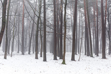 Fog and snow in a forest