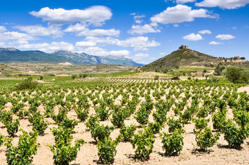 Vineyards at La Rioja (Spain)