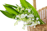 Lily of the valley in basket isolated on white