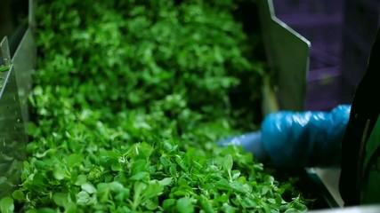 Selezione lavaggio confezionamento verdura