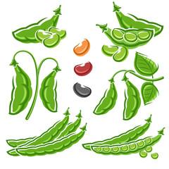 Beans set. Vector