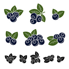 Blueberries set. Vector