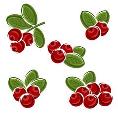 Cranberry set. Vector