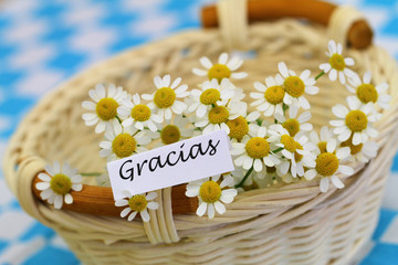 Gracias card (thank you in Spanish) with chamomile flowers