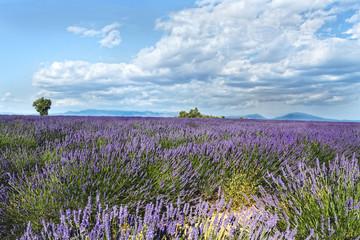 High Provence, Provence Alps Côte d'Azur regions,  France